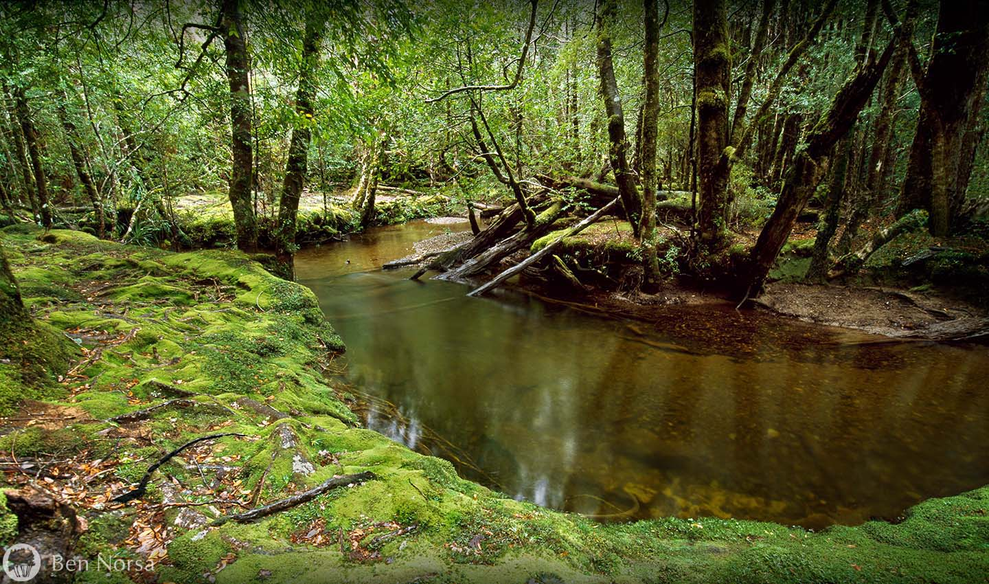 creek,moss,cephissus,rainforest,temperate rainforest,Pine Valley
