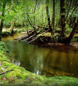 Cephissus Creek Pine Valley