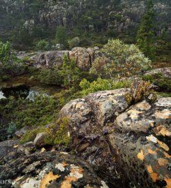 The Labyrinth Tasmania