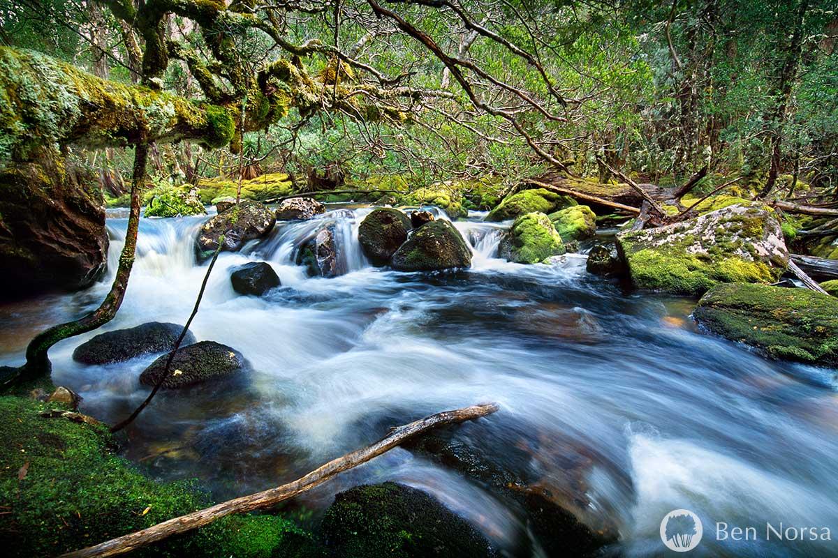 Fine art photographic print of Cephissus Creek Pine Valley Tasmania